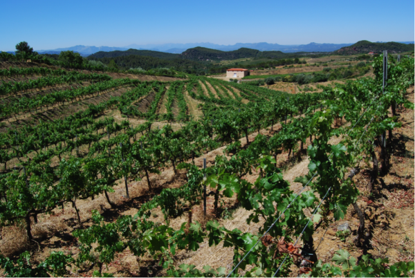 Das Landschaftsbild wird in Tarragona stark von Weinbergen geprägt