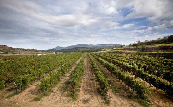 Coma d'en Bonet verfügt über 28 ha Weinberge